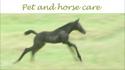 500x500-foal-ad