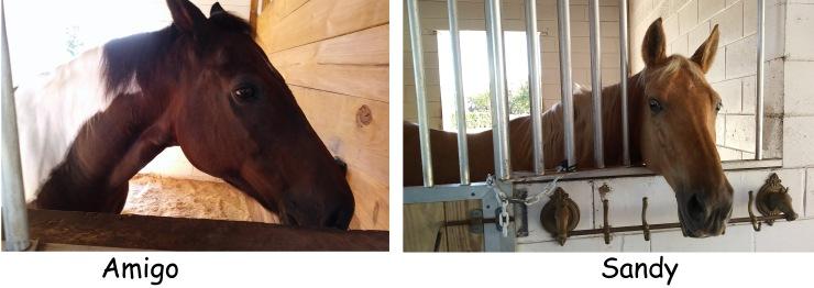Pam's horses
